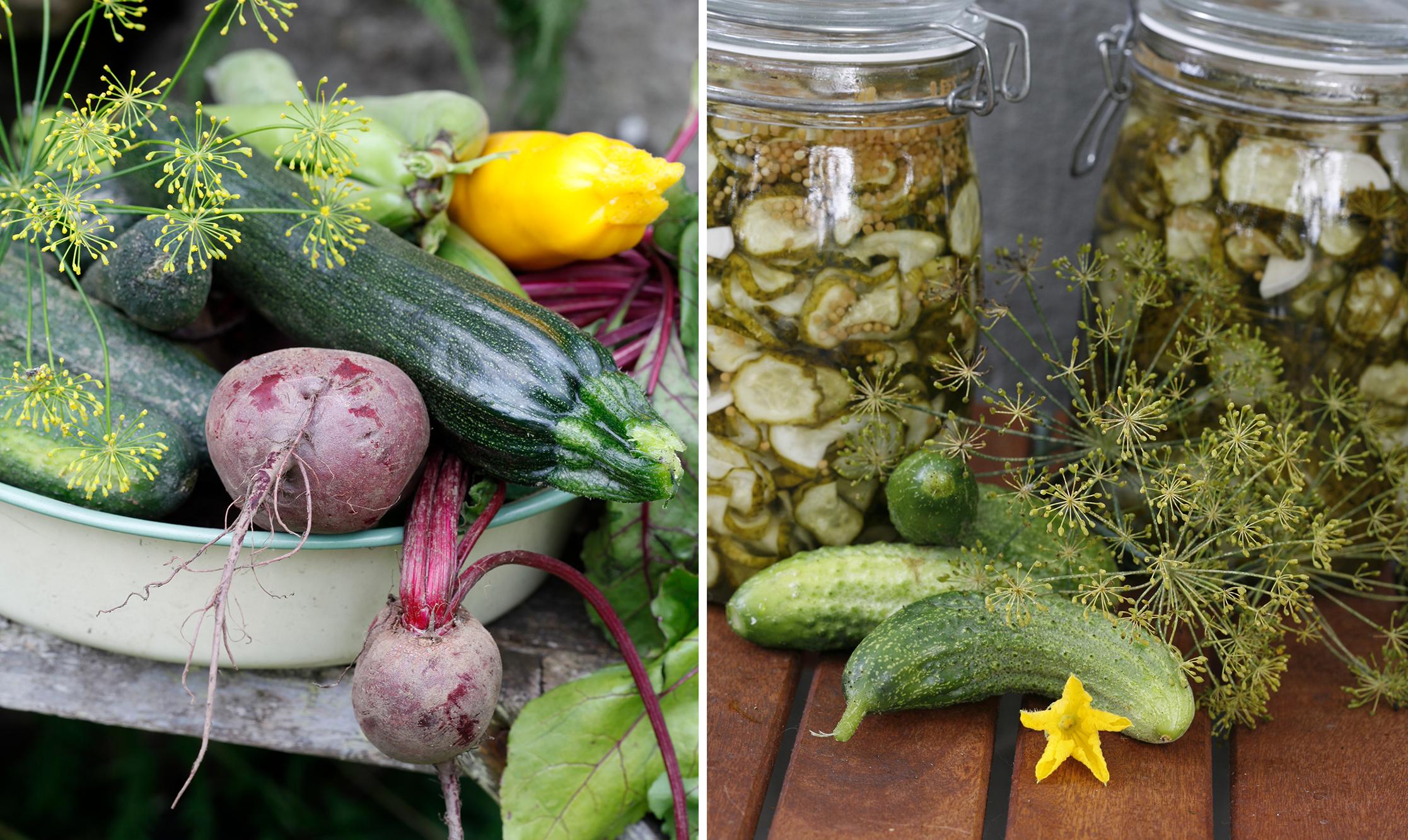 Använd rätt grönsaker till syrning