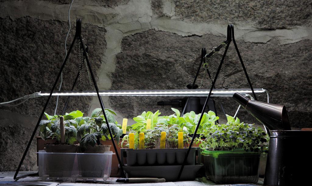 Växtbelysning Foto: Annika Christensen