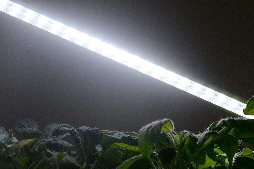 Våra ögon och växternas blad uppfattar inte ljus på samma sätt.