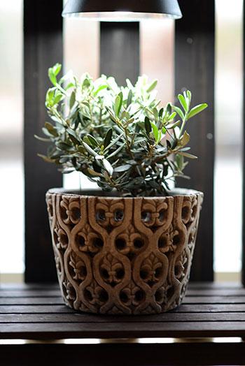 Extra belysning kan göra stor skillnad för dina övervintrade växter. Foto: Markus Danielsson
