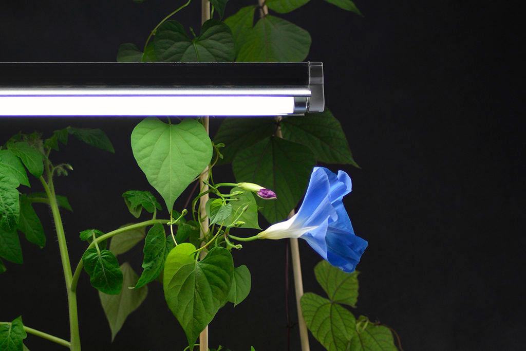 Välj lampa och placera den så att så att så mycket av ljuset träffar så mycket av plantan som möjligt. Foto: Markus Danielsson