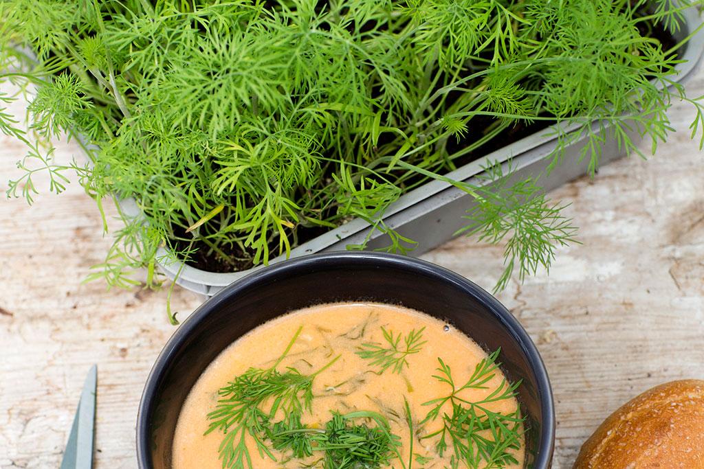 Med kryddor i köket får du smak av nyskördat redan innan primörsäsongen startat. Foto: Annika Christensen