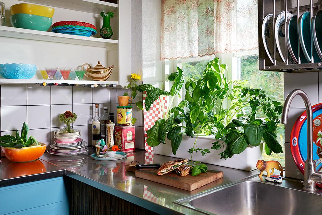 Med en hydroponisk odling behöver du inte dra in jord i köket. Foto: Peter Carlsson