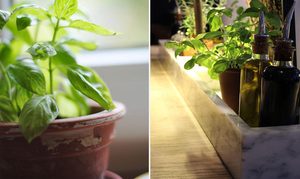 Lerkrukor är fint och håller jorden väldränerad, ibland lite för bra. Håll koll så att dina kryddor inte torkar ut.