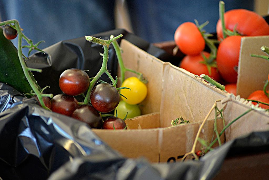 Tomater finns i olika storlekar, färger och former. Foto: Lovisa Back