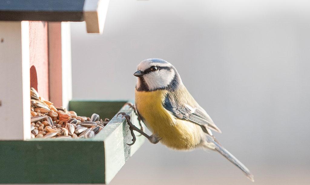 samlas fågelmat i