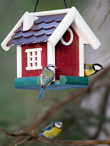 Både blåmesen och talgoxen har gula fjädrar och är ganska små. Foto: Lennart Hyse och Christer Svensk
