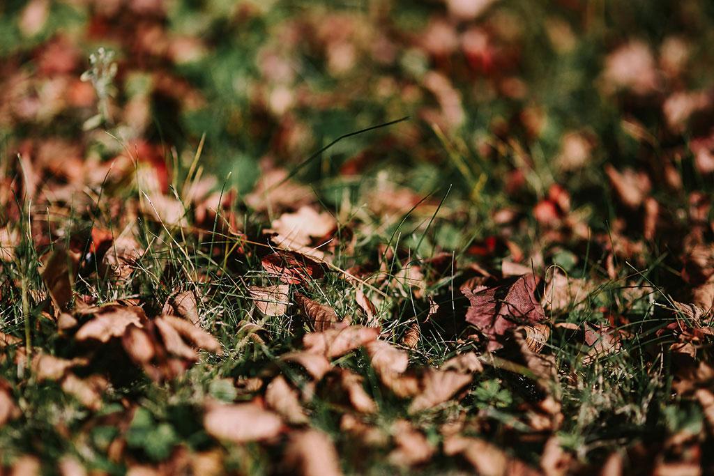Ta vara på höstens torra löv och använd dem för att förbättra jorden.