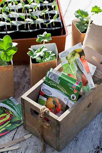 Det finns många sätt att förså på. Välj den metod som passar din odling och de sorter du vill odla, så brukar det gå fint! Foto: Annika Christensen