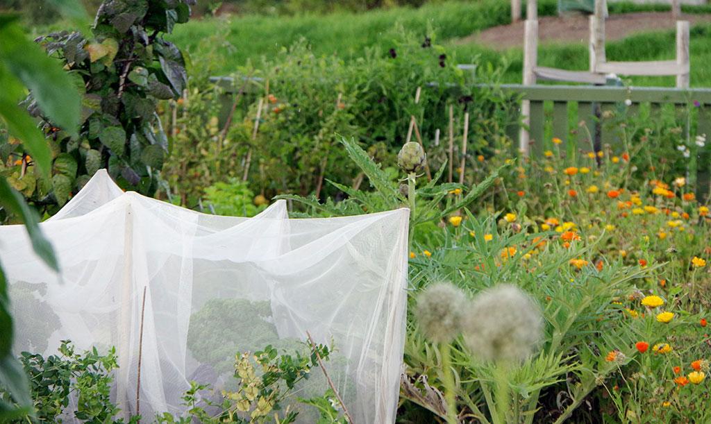 Kålnät i frodig trädgård. Foto: Lovisa Back