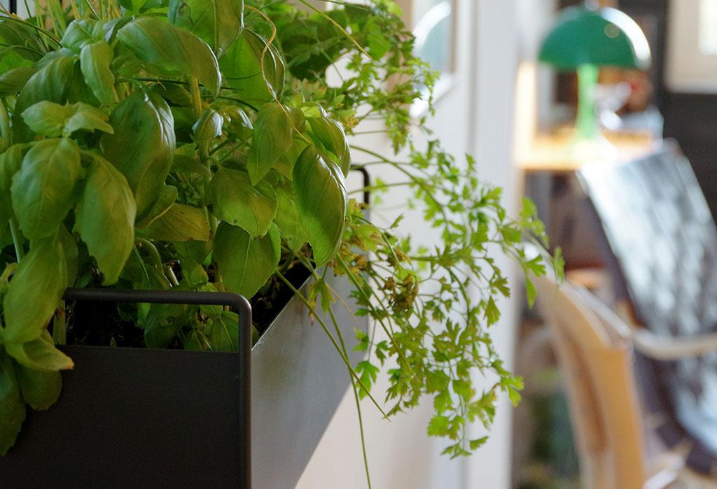 Låt din kryddodling få sprit med hjälp av näringsrik kompost som du själv skapat. Foto: Lovisa Back