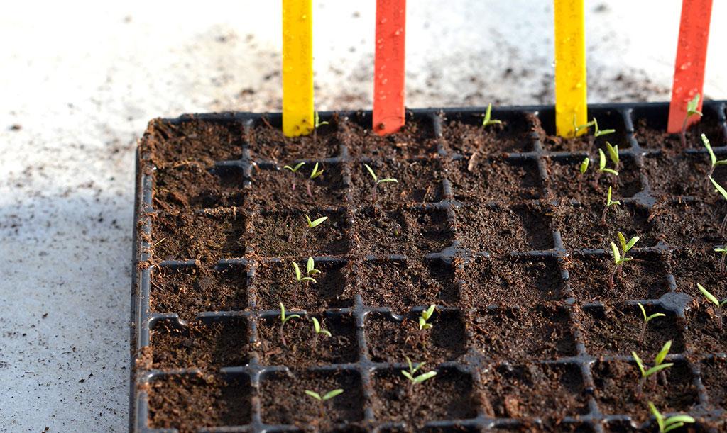 De största modellerna av odlingsbrätten passar den som har stora odlingsmöjligheter.