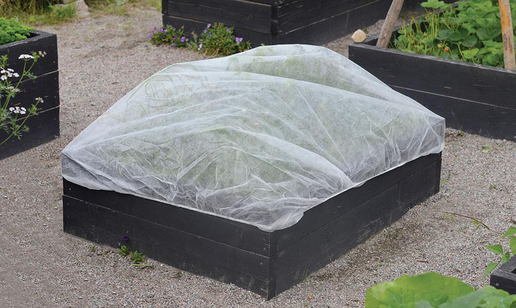 Skydda dina plantor mot frost Foto: Annika Christensen