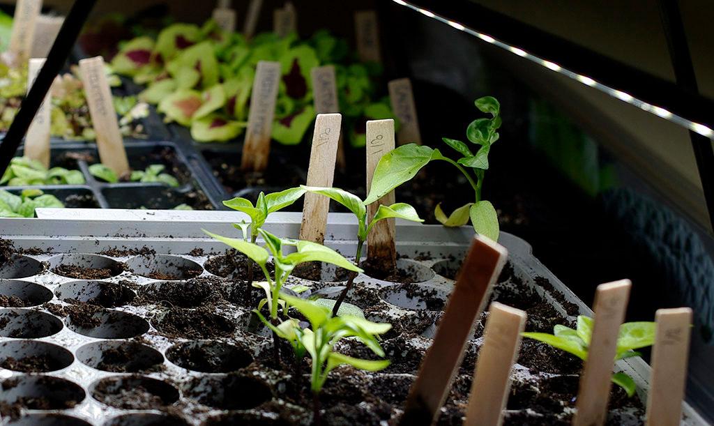 Växtbelysning Foto: Lovisa Back