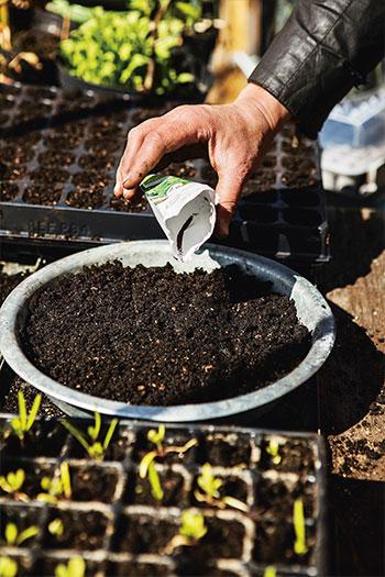 Bredsådd passar bra för sådd av snabbväxande gröna blad som ska skördas inom kort. Foto: Klas Sjöberg