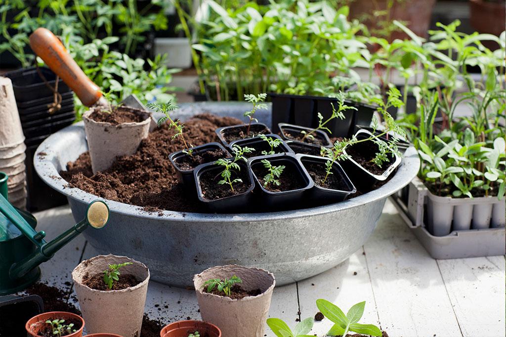 När du sår dina frön i små krukor inomhus brukar det sälla vara några problem att känna igen vad som är vad, så länge du märker dem tydligt. Foto: Annika Christensen