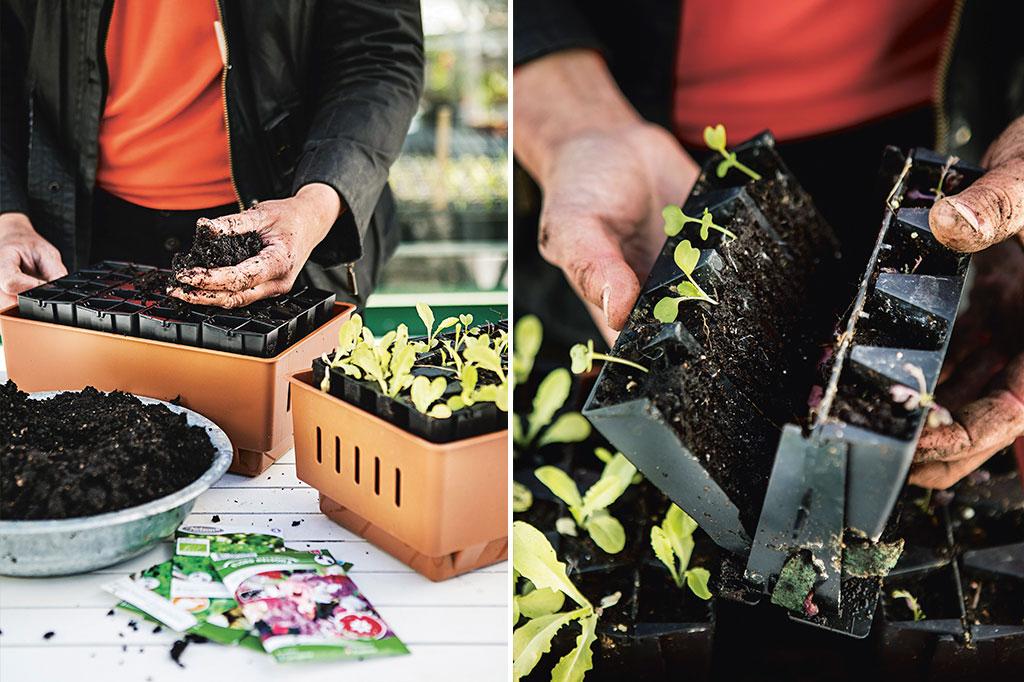 I Rootmaster odlar Jessica Lyon fram småplantor med starka rötter. Foto: Klas Sjöberg