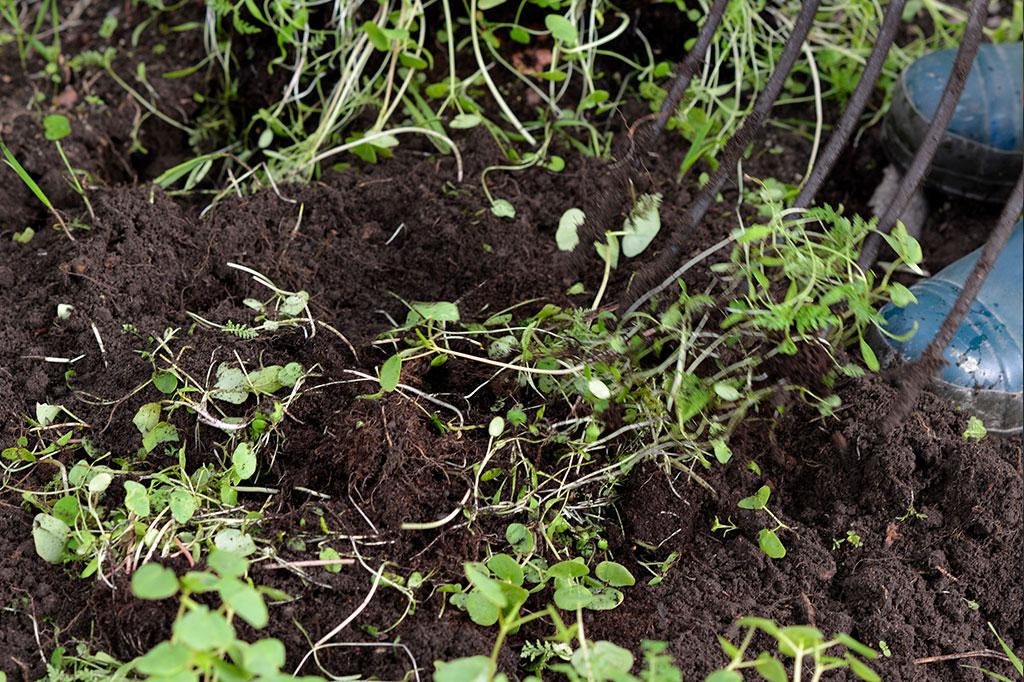 Att gräva ner växtdelar är ett sätt att återföra näring till jorden. Foto: Markus Danielsson