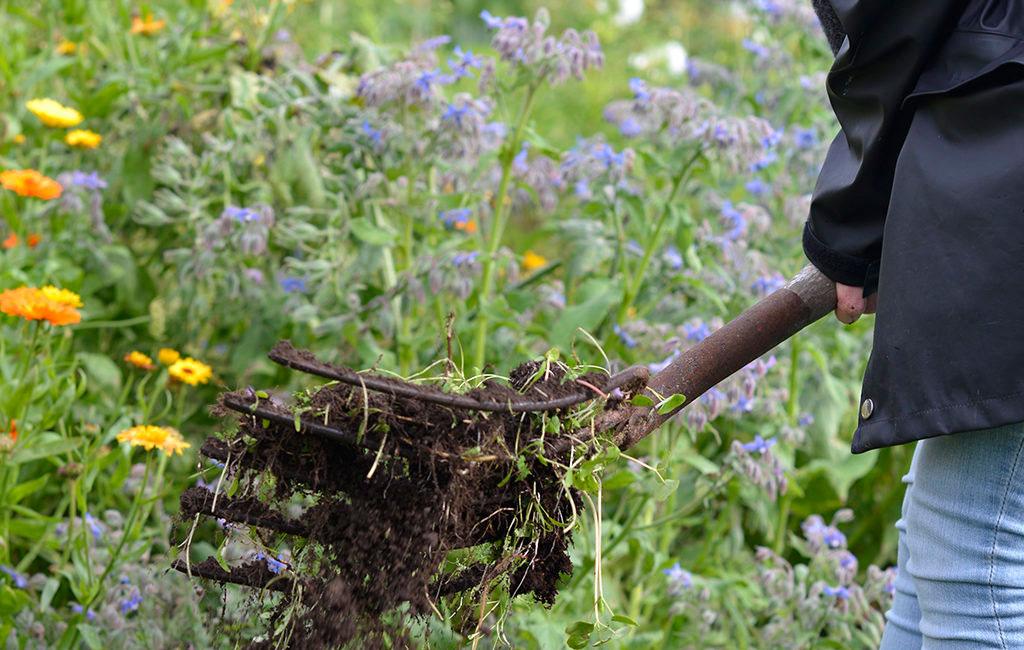 Gröngödsel handlar om att odla för att behålla en bra eller förbättra jorden.
