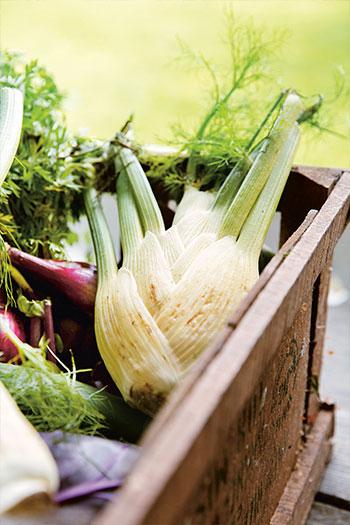 Fänkål är en favorit i trädgården och i köket hos Lisa Lemke. Foto: Emelie Otterbeck