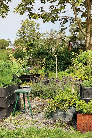 I pallkragarna trängs grönsaker, kryddor och blommor. Foto: Emelie Otterbeck