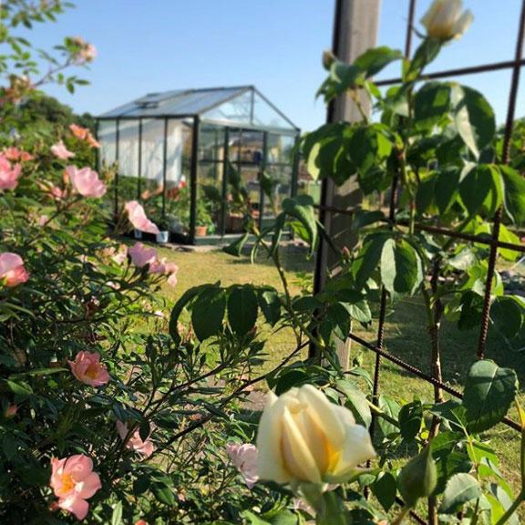 Magisk sommarmorgon på kolonin där @minodlingslycka odlar.