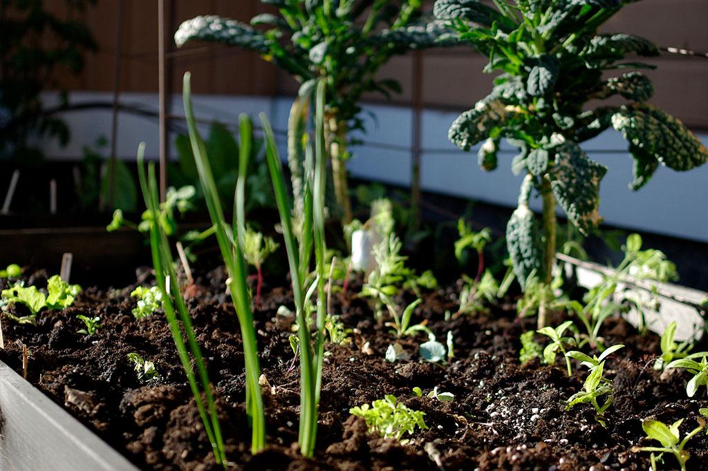 Små och stora plantor samtidigt. Foto: Lovisa Back