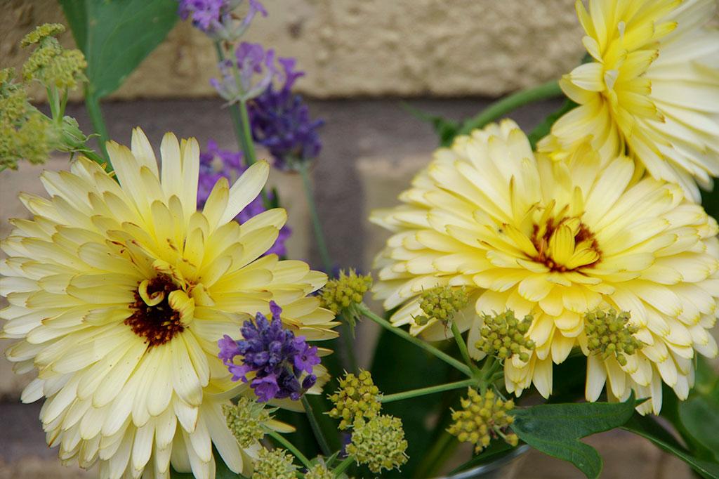 Vill du odla blommor för snitt är ringblommor ett bra alternativ. Kanske finns det fleråriga växter på platsen sedan tidigare? Dina buketter blir dessutom vackra och frodiga om du fyller ut med vilda växter. Foto: Lovisa Back