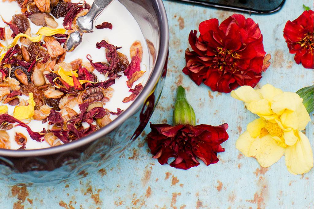 Tagetes 'Strawberry Blonde' Foto Annika Christensen