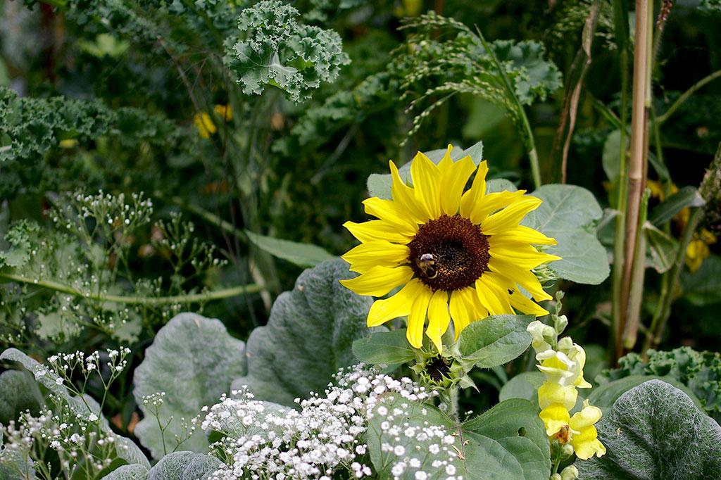 En variation på växter ger också en variation på nyttodjur där. Foto: Lovisa Back