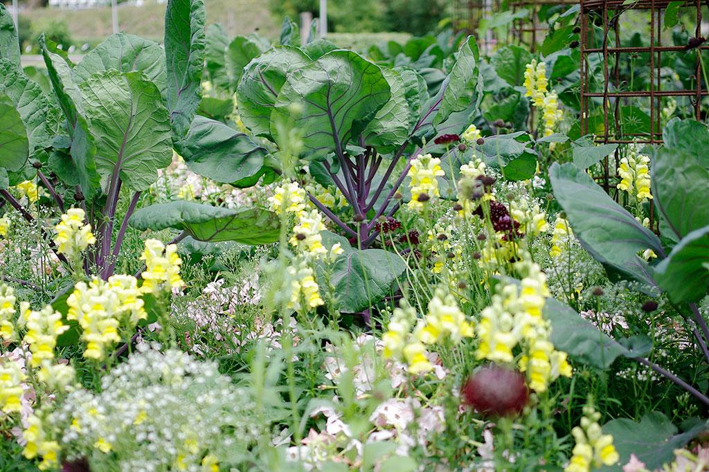 Genom att blanda grönsaker och blommor och skapa en mångfald i trädgården kan du undvika skadedjuren lättare. Nyttodjuren som attraheras av mångfalden bekämpar skadedjuren.