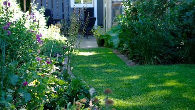 En tät växande gräsmatta ger det där stiliga uttrycket.
