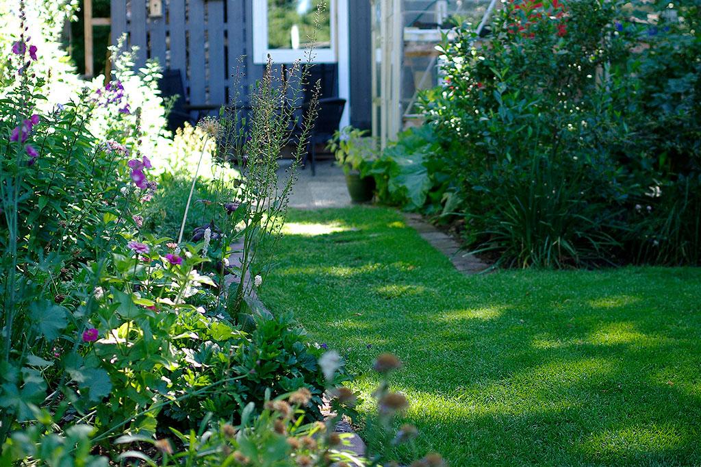 Med rätt grässorter kan även en skuggig plats få en fin gräsmatta. Foto: Lovisa Back