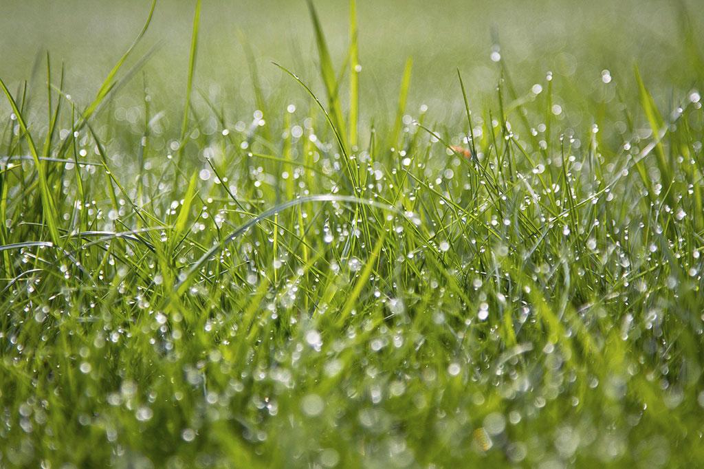Vattna lite och ofta i början. Hösten är en bra tid att så gräs för att behålla den fukt du tillför. Regnet räcker oftast inte för att hålla en jämn fuktighet.