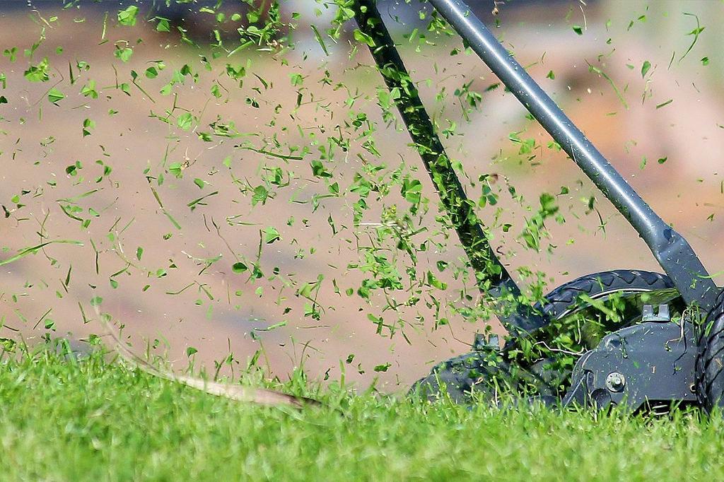 Var inte för ivrig med att klippa gräsmattan i början då den fortfarande är känslig.