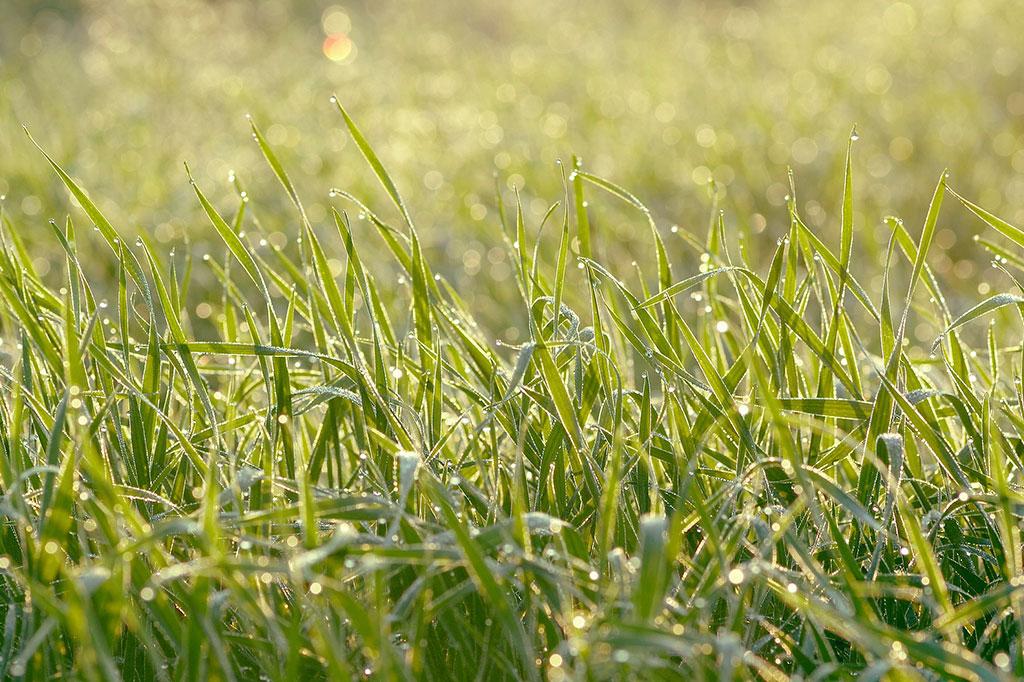 Välj rätt gräsfröblandning och så en gräsmatta som passar din växtplats.