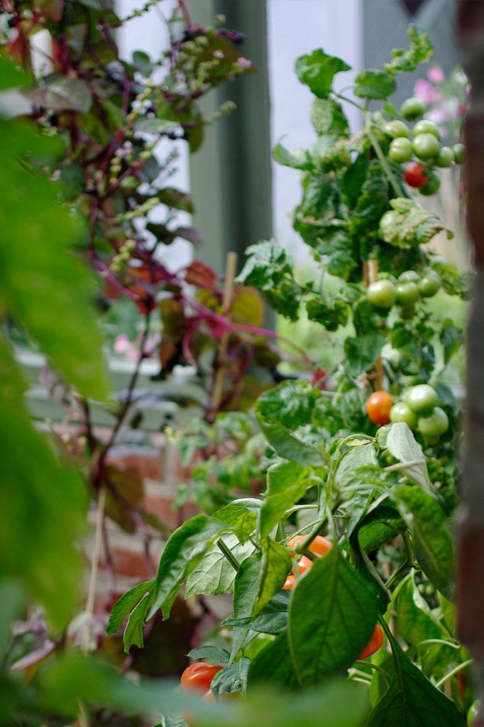 Växthuset är tillägnat det ätbara.