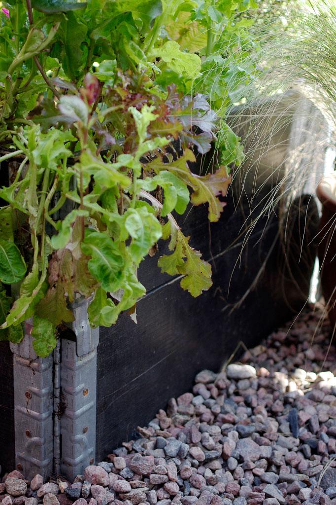 I en pallkrage växer sallat, rädisor och annat ätbart.