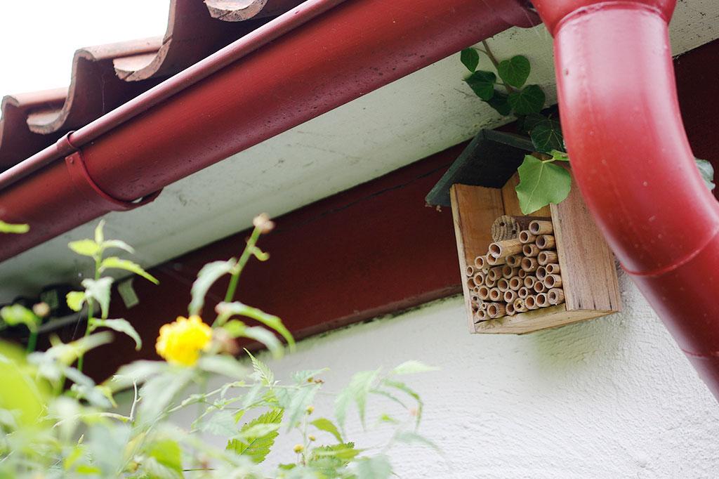 Även våra flygande odlarvänner får rum hemma hos Ulrika och Jonas.