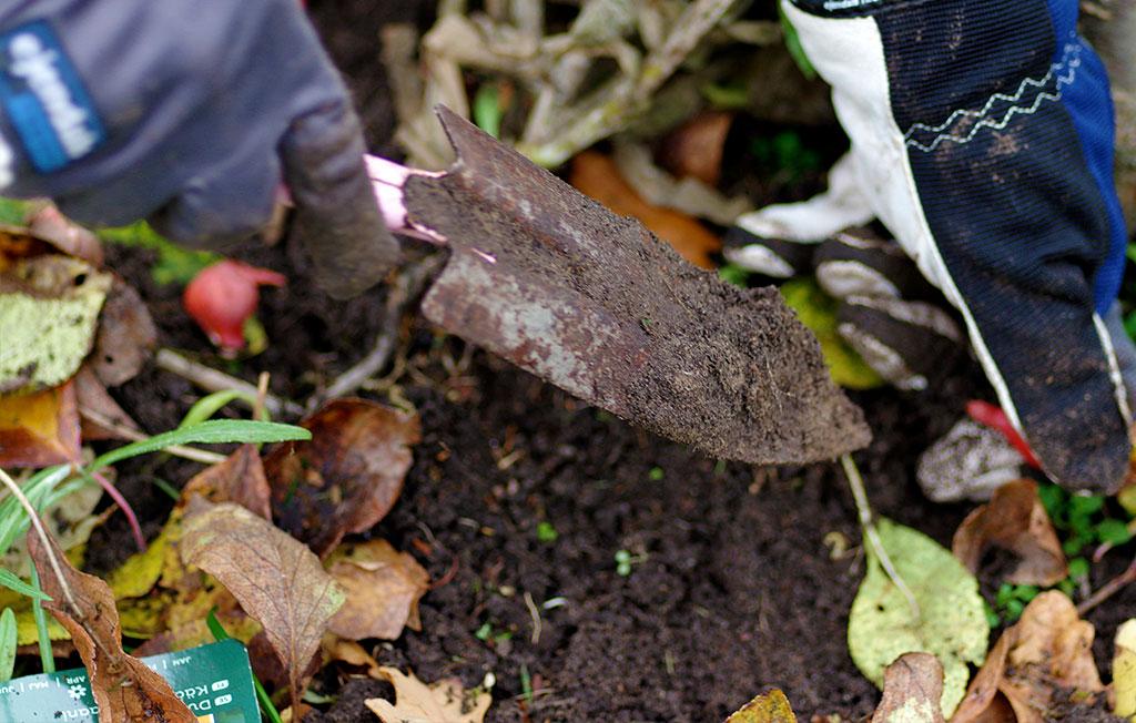 Plantera på hösten Foto: Lovisa Back