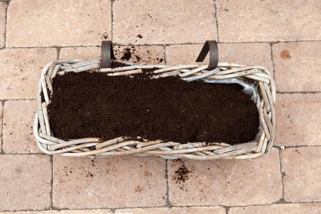 Täck första löklagret med några centimeter jord.