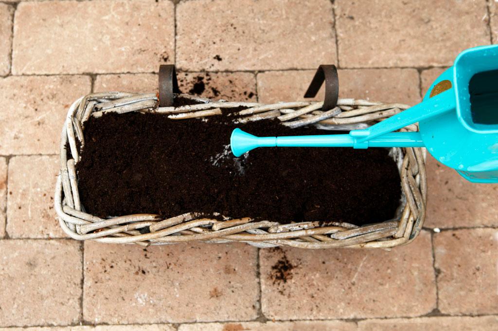 Glöm inte att vattna ordentligt innan du ställer din balkonglåda på ett svalt men frostfritt ställe. Lycka till!