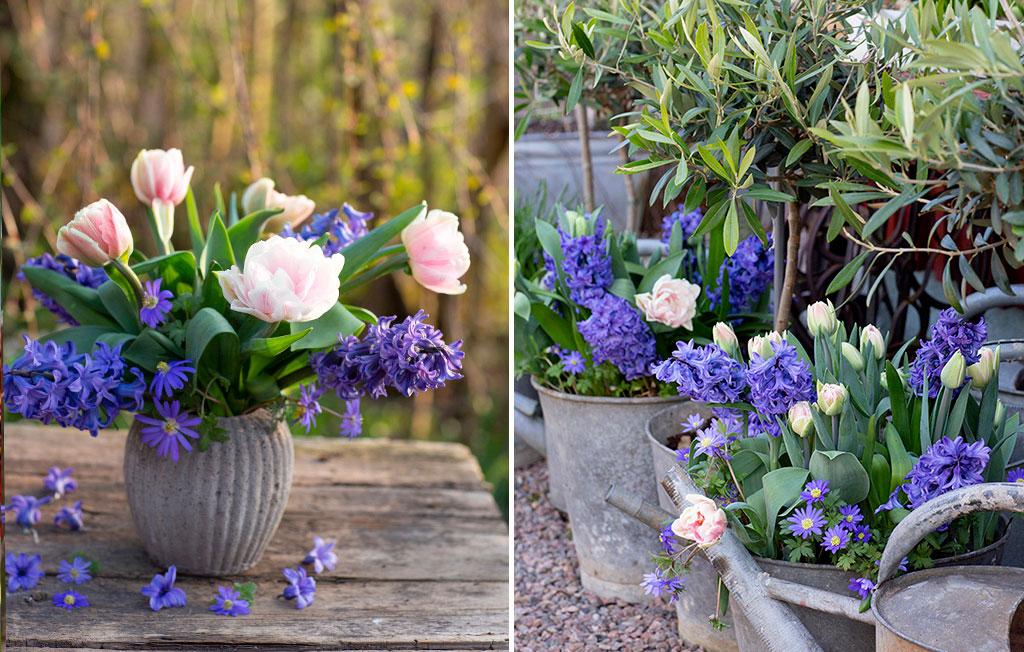 Lökblandningen Romantic Garden är ljuvlig att plocka in som bukett. Foto: Annika Christensen