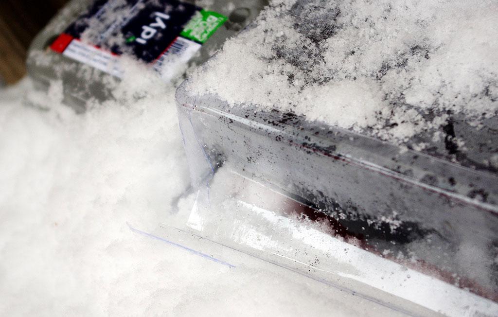Vissa fröer behöver stratifieras – frysas – för att gro. Foto: Lovisa Back