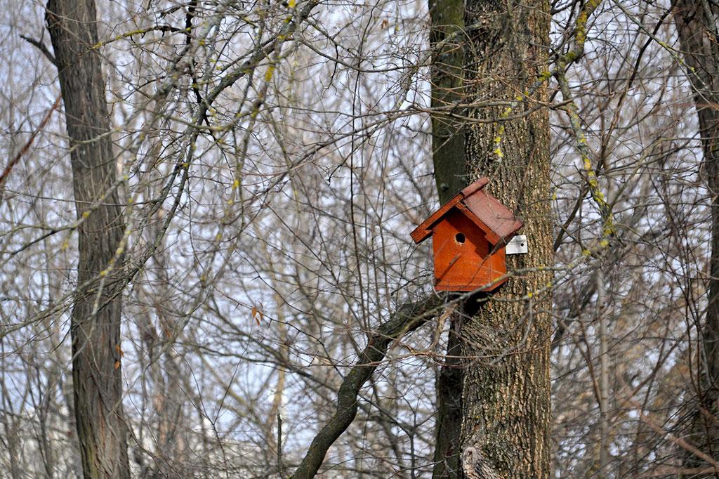 Grenar ger bra skydd även utanför holken. Se dock upp med att sätta upp fågelholken i ett träd där rovdjur kan klättra upp.
