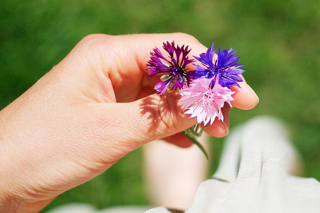 Blåklint är ytterligare en växt som självsår sig lätt och som passar utmärkt att så på hösten.