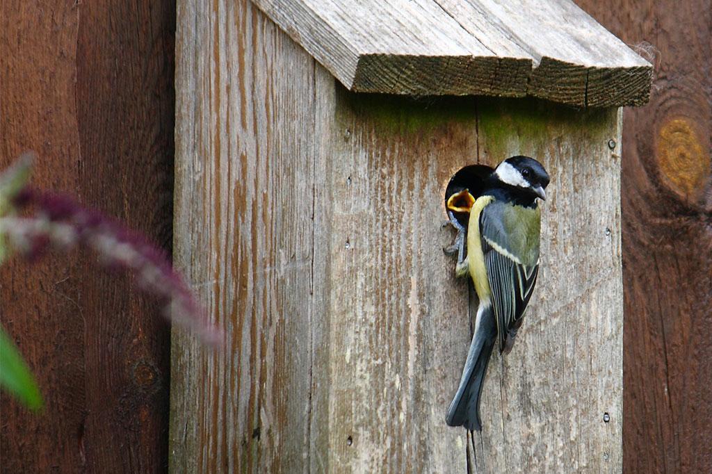 En fågelholk kan sättas upp på husväggen.