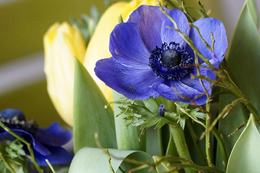 Den lilla anemonen är i all sin enkelhet en fantastisk blomma.