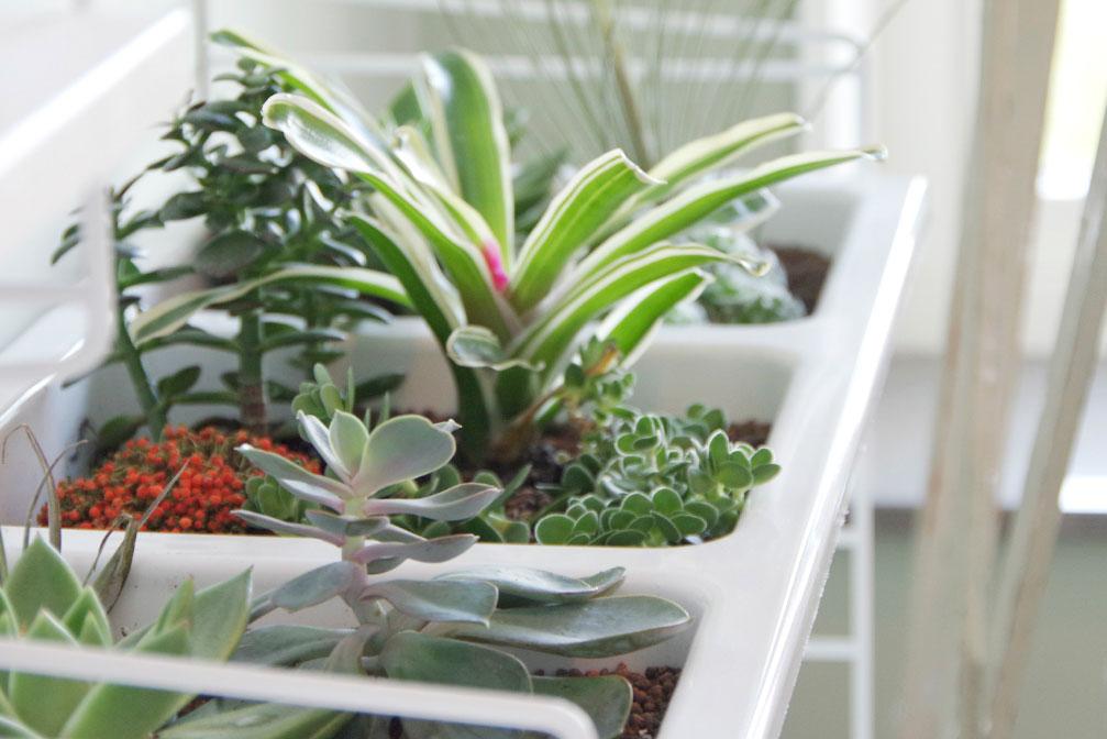 Näringsbehovet under vinterhalvåret skiljer sig åt mellan olika sorters krukväxter. Lär känna de sorter du har hemma.