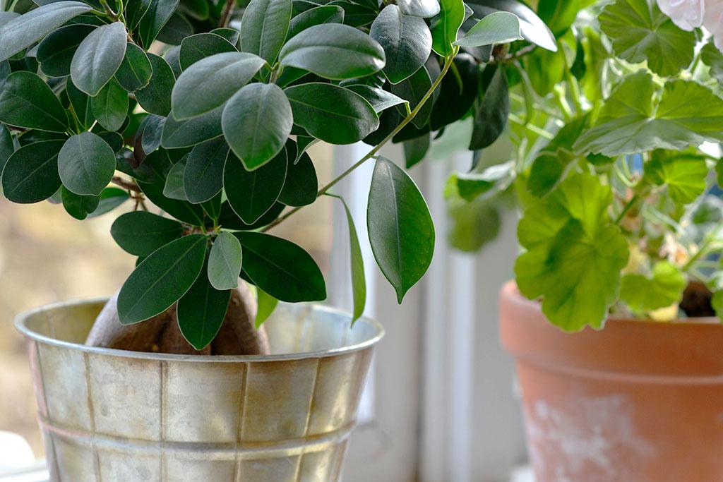 Även under viloperioder mår dina krukväxter gott av lite extra näring och ljus.